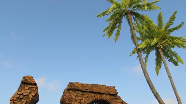 チュニジアの椰子の木